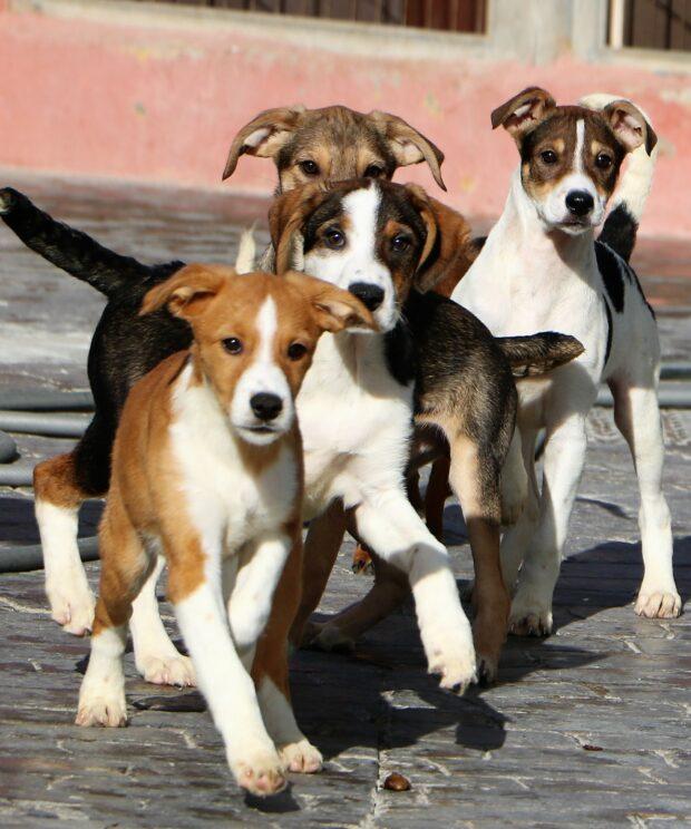 Hondenwandeling